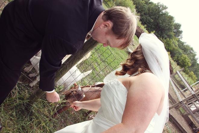 weddingcouplefeedingthegoatsonthefarm-DMP