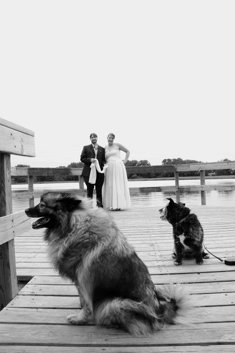 weddingcoupleandtheirpetdogs-DMP